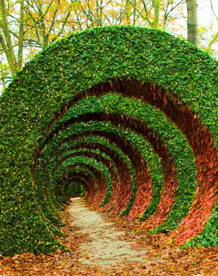 35 meter long and 7 meter high spiral movement made from Abies and red painted ferns. Walking through this construction gives a spectacular experienceI.